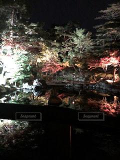 森の眺めの写真・画像素材[2712606]