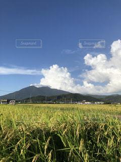 筑波山の山麓に広がる田んぼの写真・画像素材[2530032]