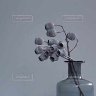 ユーカリテトラゴナ と花瓶の写真・画像素材[2525956]