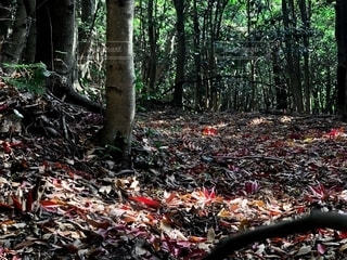 森の中の風景の写真・画像素材[2768143]