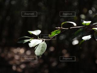 花をクローズアップするの写真・画像素材[2789736]