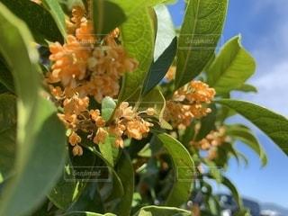 花の写真・画像素材[2616457]