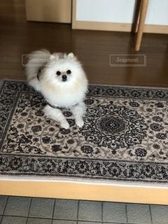 お出迎えする犬の写真・画像素材[2764005]