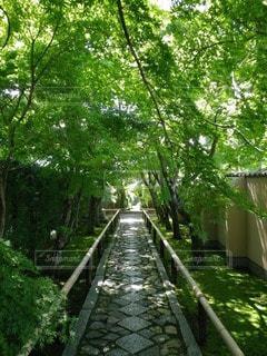 自然の写真・画像素材[103614]