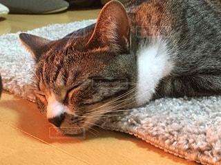 猫の写真・画像素材[100413]