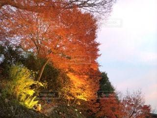 恋人の写真・画像素材[103149]
