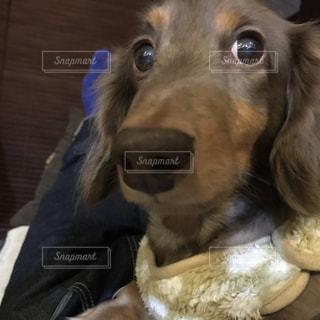 犬のクローズアップの写真・画像素材[2532921]