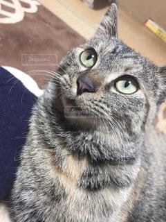 猫のクローズアップの写真・画像素材[2552807]