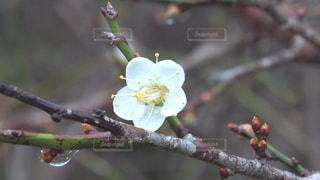 花の写真・画像素材[129469]
