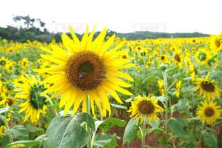 花の写真・画像素材[129471]