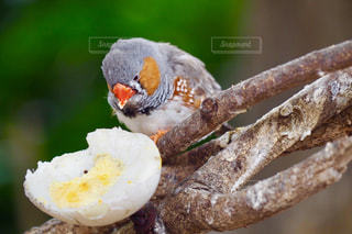 小鳥のお食事の写真・画像素材[2548477]