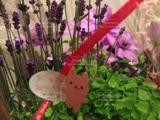 花の写真・画像素材[114164]