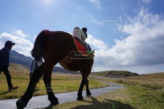馬と子供と大自然の写真・画像素材[2527474]