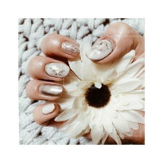 nailの写真・画像素材[2528368]