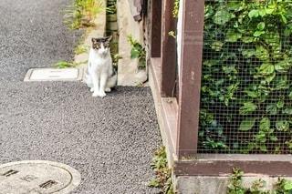 猫の写真・画像素材[2560432]