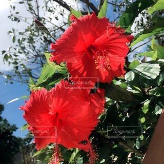 花の写真・画像素材[30013]