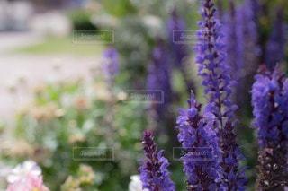 花の写真・画像素材[97622]