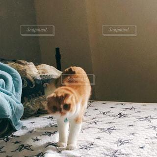 ベッドの上に立つ猫の写真・画像素材[2525476]