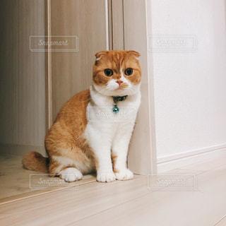 壁の横に座っている白の猫の写真・画像素材[2525578]