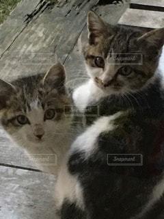 猫が好きの写真・画像素材[97848]