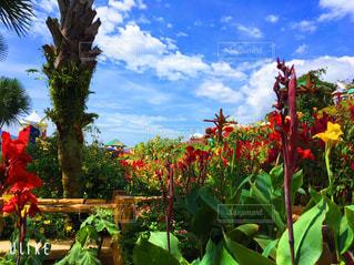 花園のクローズアップの写真・画像素材[2535172]