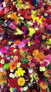 花のクローズアップの写真・画像素材[3697463]