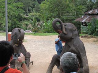 象の写真・画像素材[316700]