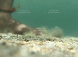 魚の写真・画像素材[2565265]