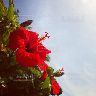 花瓶の中の赤い花の写真・画像素材[2538756]