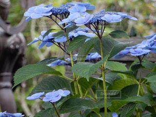 花の写真・画像素材[2566670]