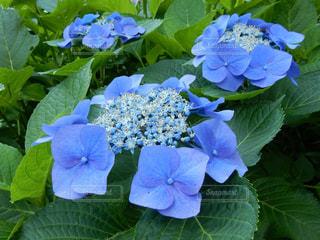花の写真・画像素材[2566671]