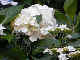 花の写真・画像素材[2566673]