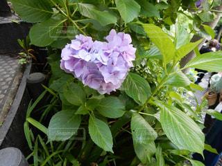 花の写真・画像素材[2566678]