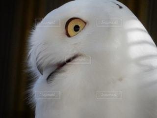 鳥を閉じるの写真・画像素材[2706323]