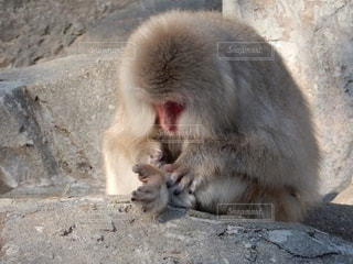 動物園の囲いの中のホッキョクグマの写真・画像素材[2706325]