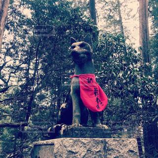 三峰神社の狼狛犬の写真・画像素材[1374721]