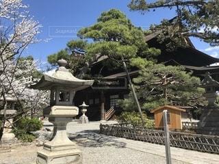 善光寺の灯篭と桜の写真・画像素材[1374803]