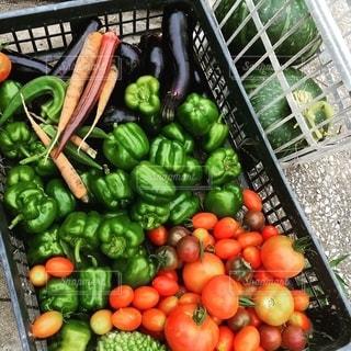 夏野菜の写真・画像素材[2568009]