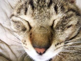 猫の写真・画像素材[53840]
