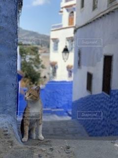青の町の猫の写真・画像素材[2538956]
