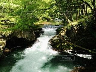 自然の写真・画像素材[2567083]