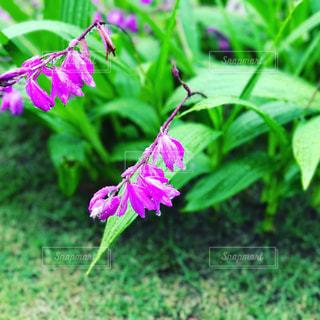 花の写真・画像素材[510940]
