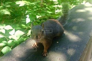 動物の写真・画像素材[81521]