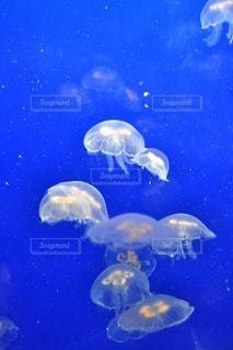 海の写真・画像素材[87797]