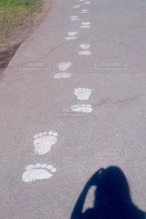 足の写真・画像素材[96060]