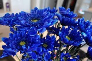 花の写真・画像素材[111154]