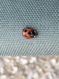 昆虫の写真・画像素材[2563942]
