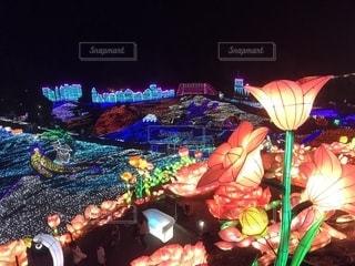 カラフルな花の群しの写真・画像素材[2531186]