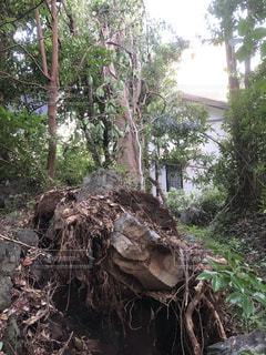 台風による倒木の写真・画像素材[2531651]