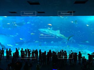 沖縄美ら海水族館を背景に大勢の人の水中展望の写真・画像素材[2534394]